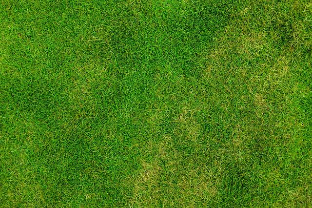 Dbamy o trawnik